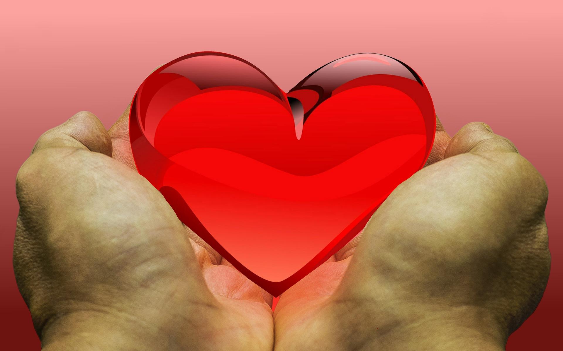Donación y trasplantes. Tipos de trasplantes